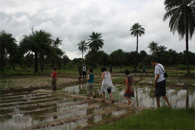 Campos de arroz de la familia de Lamine en Darsalam
