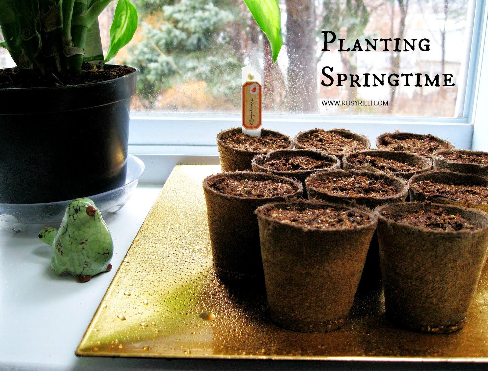 ROSYRILLI.COM March seedlings