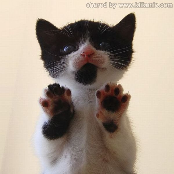 http://4.bp.blogspot.com/-5_5Dneic03c/TXWI1LvU6KI/AAAAAAAAQNU/KjvSdae7oew/s1600/these_funny_animals_632_640_18.jpg