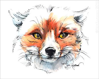 drawing a fox