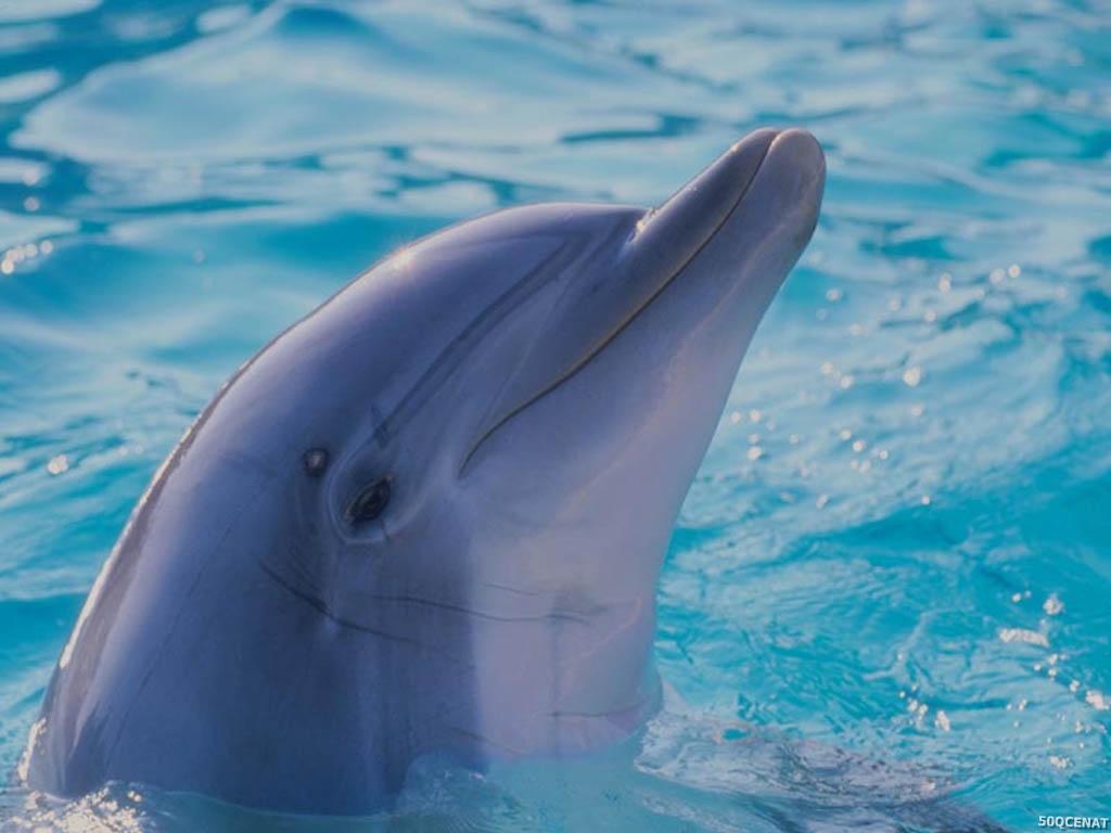 delfinler haqqinda