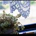#048 観葉植物と今日の夕方