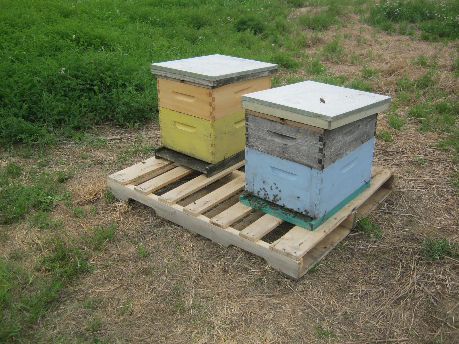 steven u0027s bees