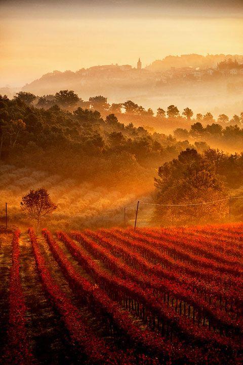 Vineyards - Umbria, Tuscany