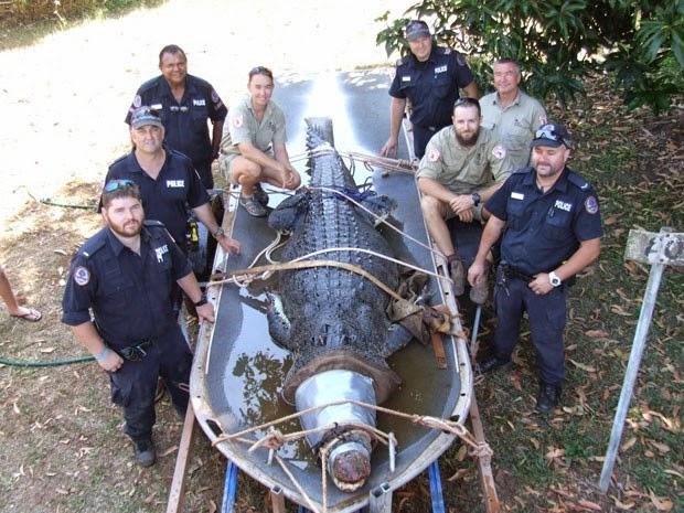 Réptil de 4,3 metros vinha assustando os moradores australianos. (Foto: Reprodução/Facebook/Northern Territory Parks and Wildlife)