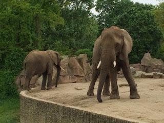 Elefanten im Tierpark Berlin