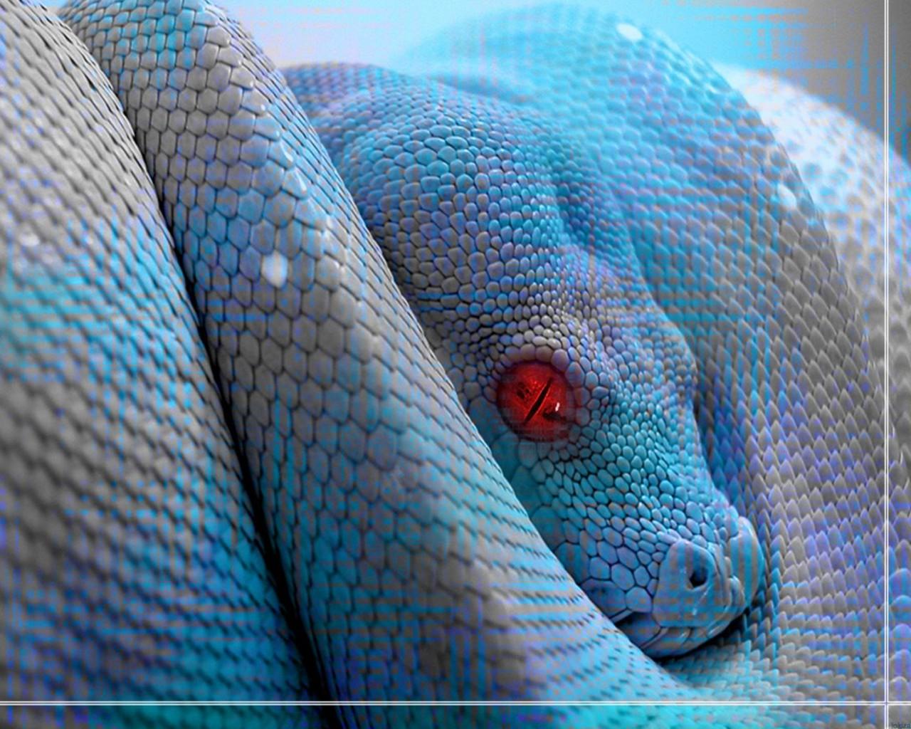 A 2 Z Reptiles Reptiles hd wal...