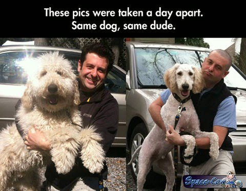 funny dog people humor