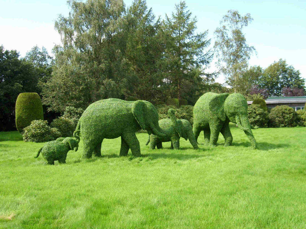 Green Animal Garden Topiary Art in addition Connecticut Garden Journal Growing Onions likewise Parthenium hysterophorus  Parthenium Weed besides Creeping Red Fescue as well Toxic Plants Hosta. on small perennial garden