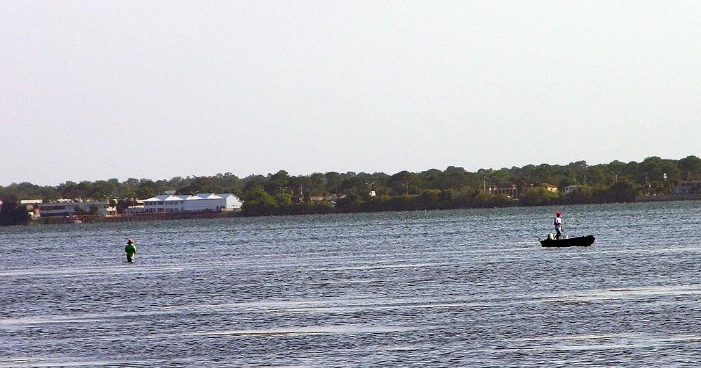 Mosquito lagoon indian river fishing tarpon in the marsh for Indian river florida fishing