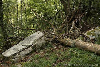 macro arbre forêt nature Fontainebleau Seine et Marne
