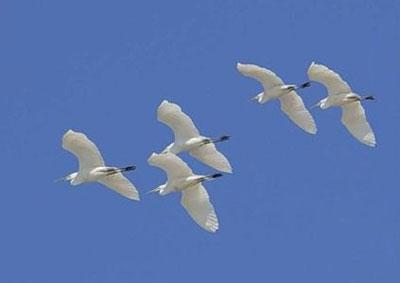 22 октября - Праздник белых журавлей