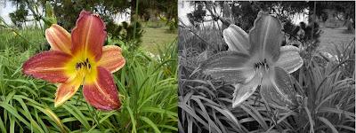 Foto colorida para foto preto e branco