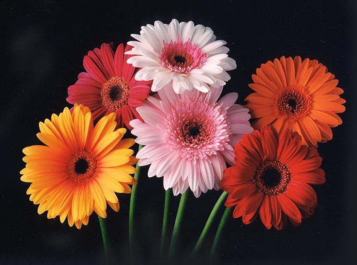 best flowers in the world best flowers of hawaii