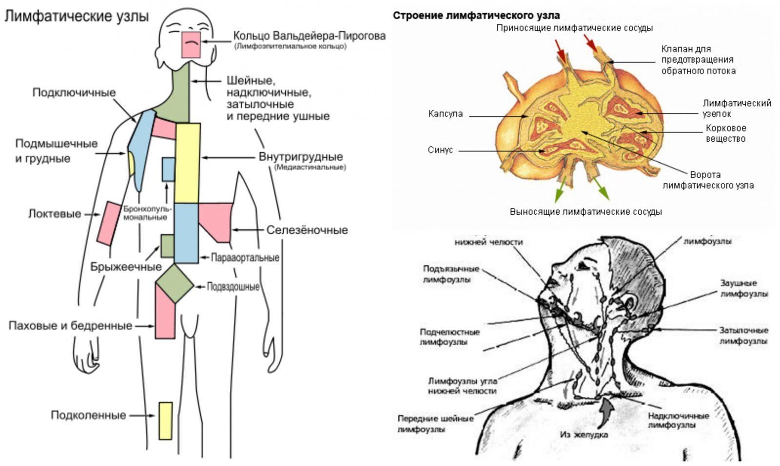 Чем лечить в домашних условиях лимфоузлы