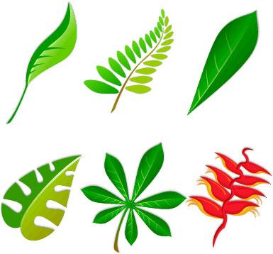 Elaboraci n del muestrario de hojas de plantas for Arboles de hoja perenne para madrid