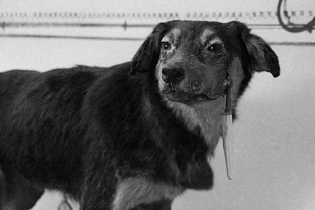 Los perros de Pavlov