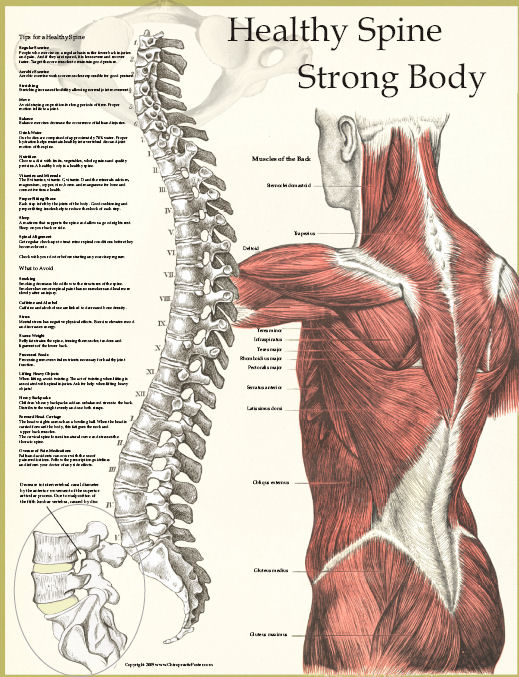 Justins Systema Blog You Are As Old As Your Spine