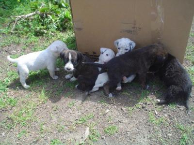 Foto di cuccioli di cani appena nati for I cani youtube