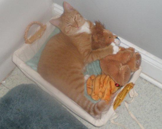 cat sleeping with plushies