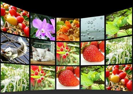 Free Flash Photo Gallery Application - Nulled Php Scripts | Best ...: 2012tipsandtricks.blogspot.com/2012/02/free-flash-photo-gallery...