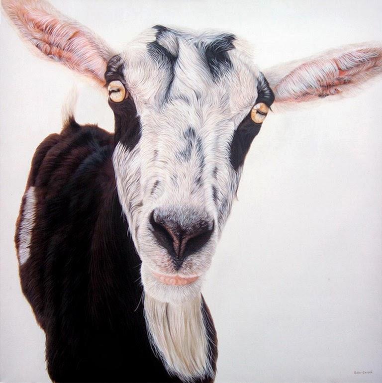 animales-Imagenes