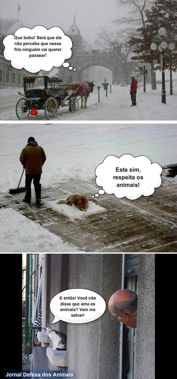 Os animais são inocentes