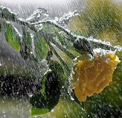 'Yağmur herkese yağar, ama çok az insan tutar yağmurun ellerini'