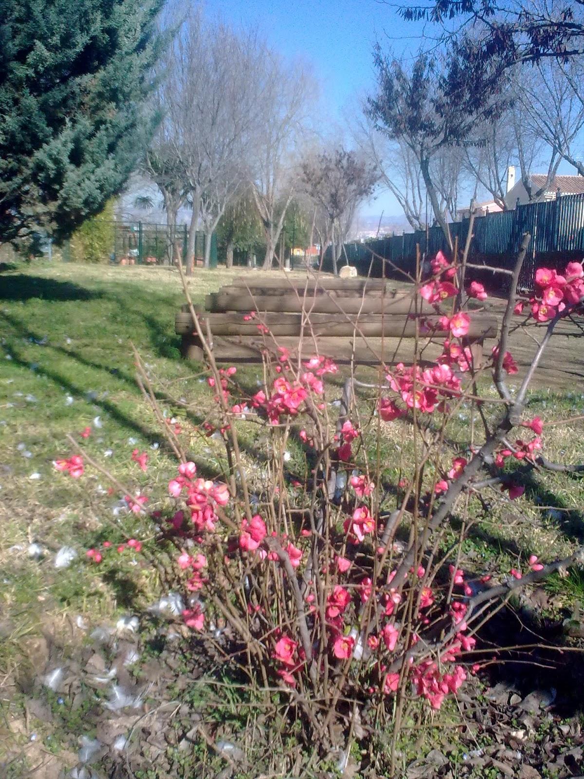 Parques y jardines de ogijares arreglo y limpieza parque for Parques y jardines