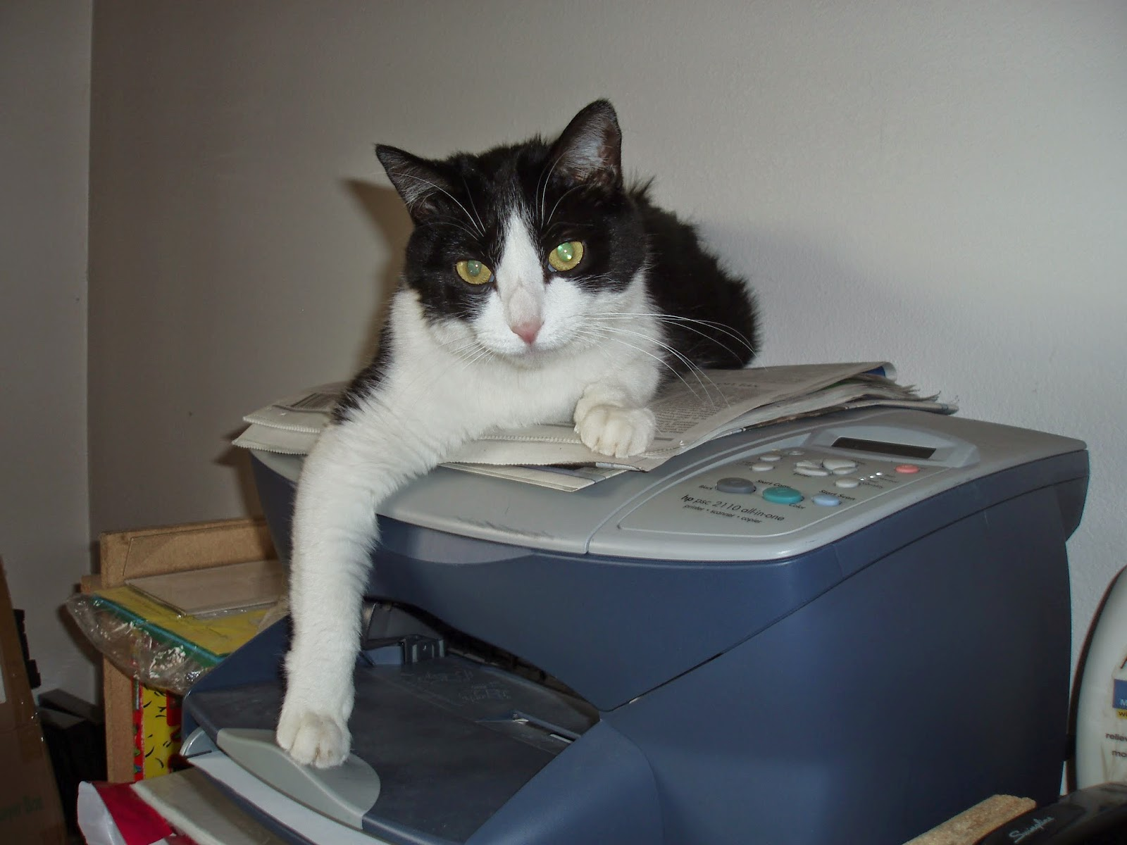 cat sleeping on scanner