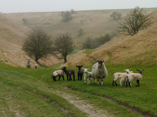 Spring lambs in shallow chalk valley, Ridgeway National Trail