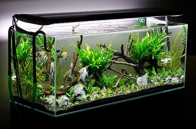 An Aquarium That Is Very Deep Is Complicated To Keep For The Beginner  Aquarist. Increased Height Means Greater Difficulty When Cleaning ...