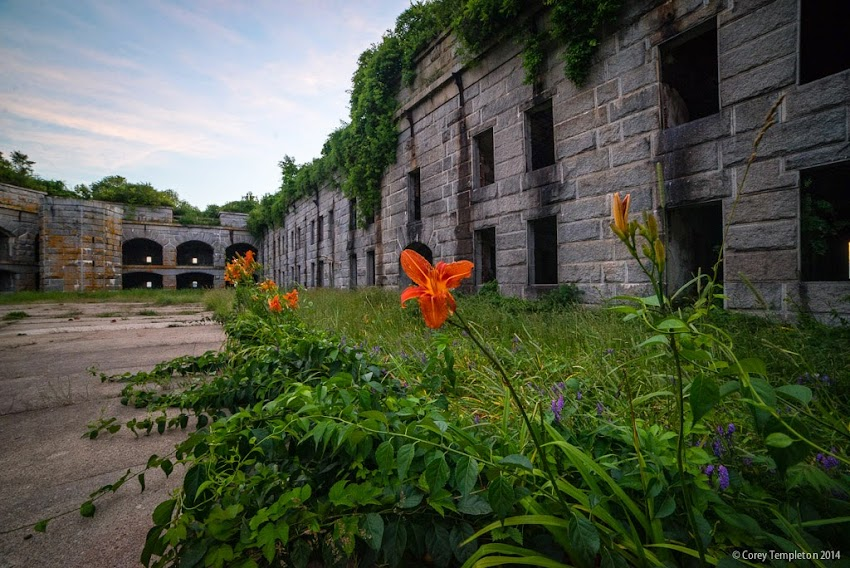 Portland, Maine Fort Gorges Casco Bay flowers july 2014 summer photo by Corey Templeton
