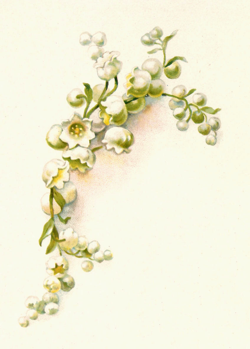 Lily of the Valley Flower Clip Art Free
