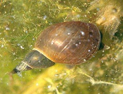 Mollusca - hewan bertubuh lunak