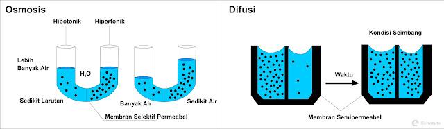 Gambaran Transpor pasif untuk osmosis dan difusi - echotuts