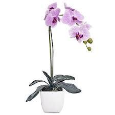 Orquideas que significan - Tiestos para orquideas ...