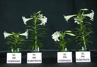 Some Effects Of Plant Growth Regulators