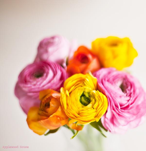 Flower Blume Ranunkel