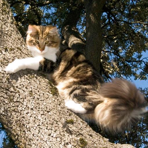 gatos bosque: