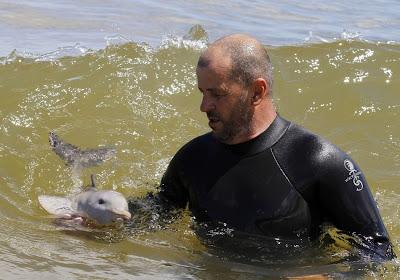 Tiernas imágenes de un Delfín bebé encontrado en una play
