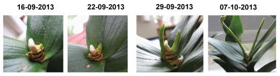 orchidee evolution