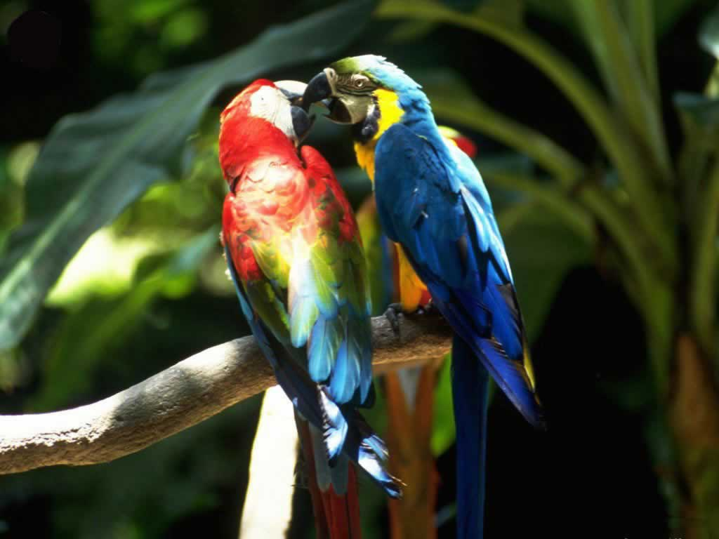 WALLPAPERS: PARROT