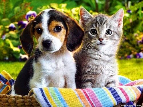 Photo de bebe chien trop mignon - Image des mignon ...