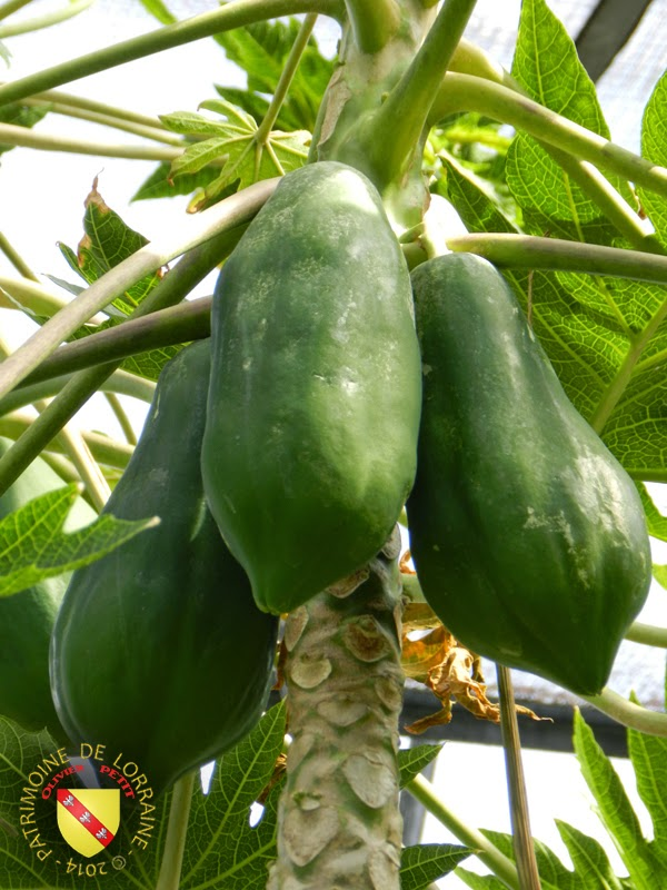 VILLERS-LES-NANCY (54) - Les serres du jardin botanique du Montet-Papaye
