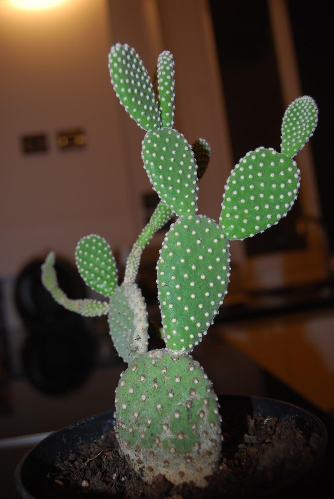 Number 6 camillo square luglio 2012 - Le piante grasse si possono tenere in casa ...