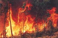 queimadas, floresta, ecologia