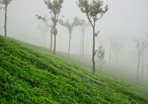 Top Sightseeing Spot in Ooty