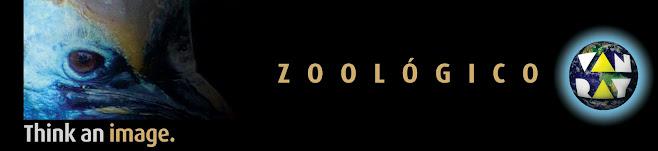 zoológico van ray