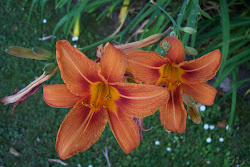 My Beautiful Orange Day Lilly